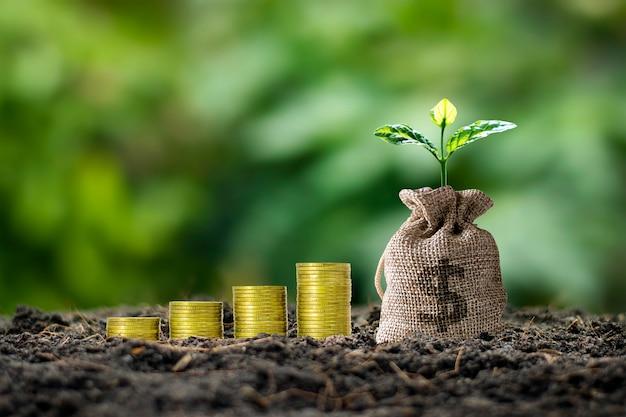Einen sparbörsenbaum pflanzen, der in der morgensonne aus dem boden wächst, und einen wachsenden haufen münzen
