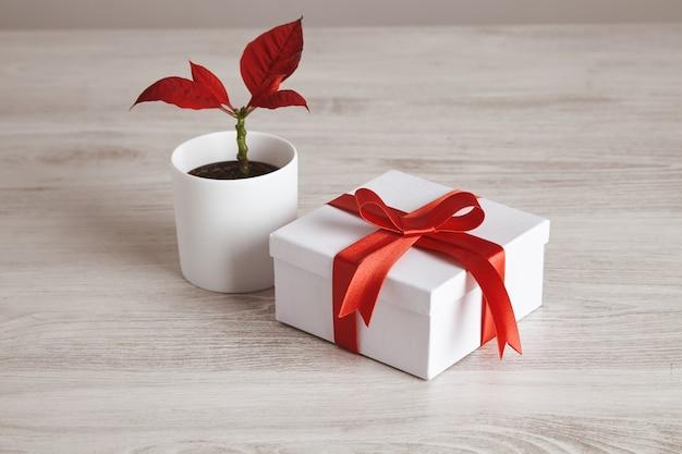 Einfache geschenkbox gebunden mit rotem seidenband nahe roter blumenpflanze. romantische liebe für valentinstag, feiertage und feste