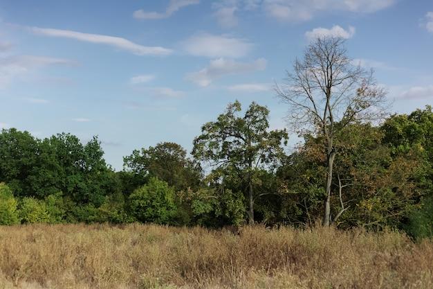 Einfacher natürlicher hintergrund der waldlandschaft im sonnigen tag mit blauem himmel und wolken.