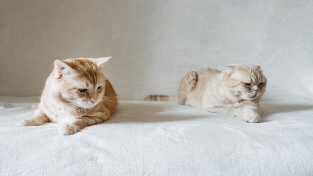 Einführung von zwei katzen adoptieren einer zweiten katze hinzufügen einer zweiten katze zu ihrem friedlichen mehrkatzenhaus im haushalt
