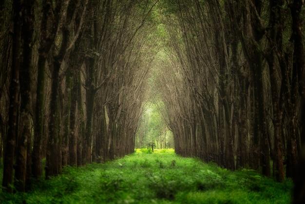 Eingebildeter baumtunnel. natur hintergrund.