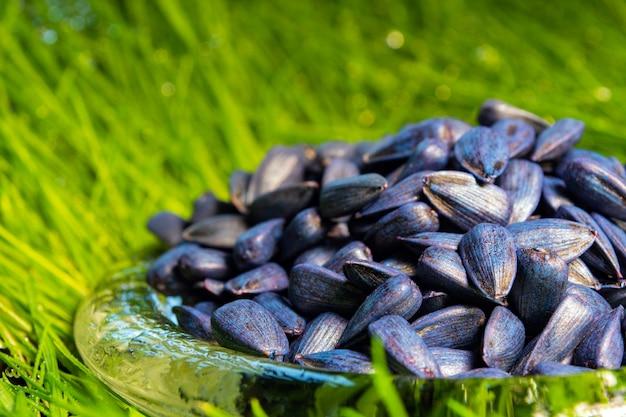 Eingelegte, blaue, pflanzenfertige sonnenblumenkerne gegen erde und gras