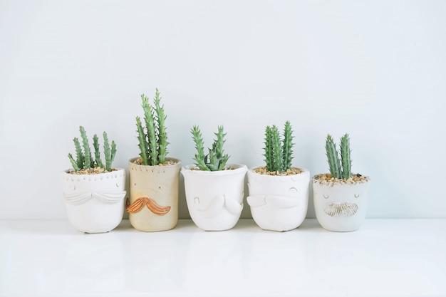Eingemachte kaktuszimmerpflanzen auf weißem regal gegen weiße wand.