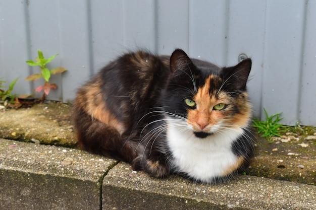 Eingeschüchterte miauende katze