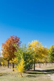 Einige bäume, die durch die ankunft des herbstes vergilbt werden