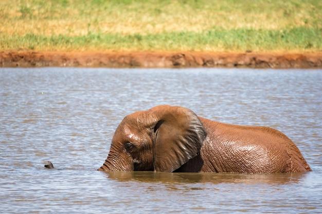 Einige elefanten baden im wasserloch in der savanne