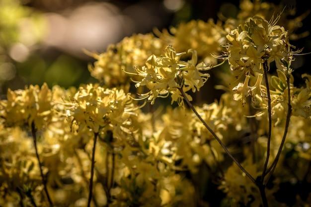 Einige schöne gelbe blumen, die an einem sonnigen tag in einem garten gefangen genommen werden