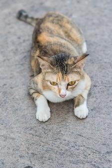 Einsame katze auf dem straßenzementhintergrund
