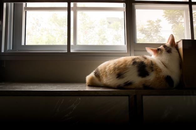 Einsame katze, die auf dem fenster mit einer traurigen haltung liegt.