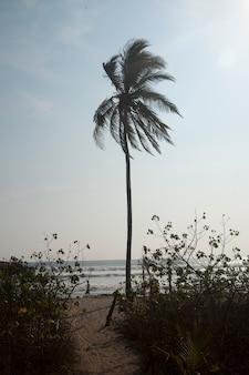 Einsame palme in der brise auf dem strand in dem meer an einem bewölkten tag