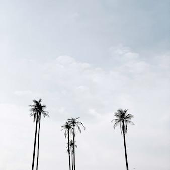 Einsame tropische exotische kokospalmen gegen blauen himmel