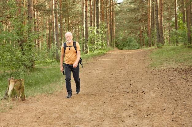 Einsamer älterer mann, der in kiefernwäldern am warmen herbsttag geht. volle länge des bärtigen älteren europäischen männlichen wanderers, der reisekleidung trägt, die rucksack trägt, während rucksack im bergwald allein