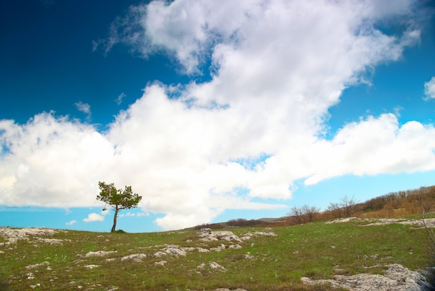 Einsamer baum auf dem feld mit blauem himmel