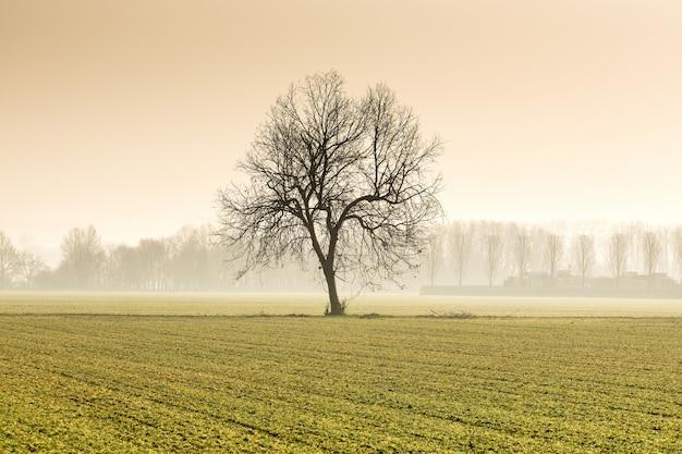 Einsamer baum auf einem landwirtschaftlichen gebiet im winter