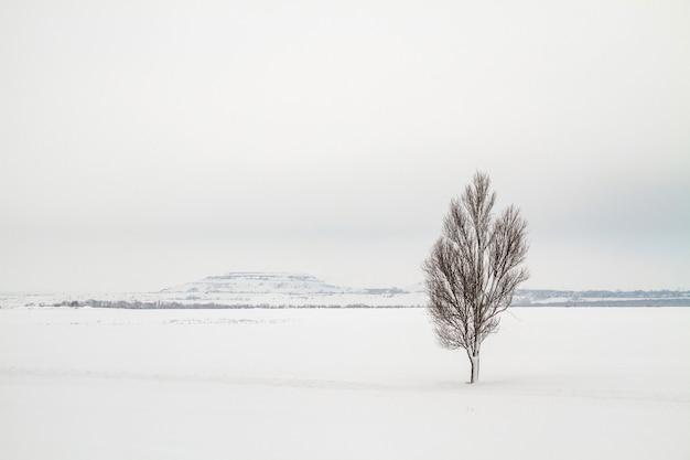 Einsamer baum auf einem schneefeld mit slagheap im hintergrund