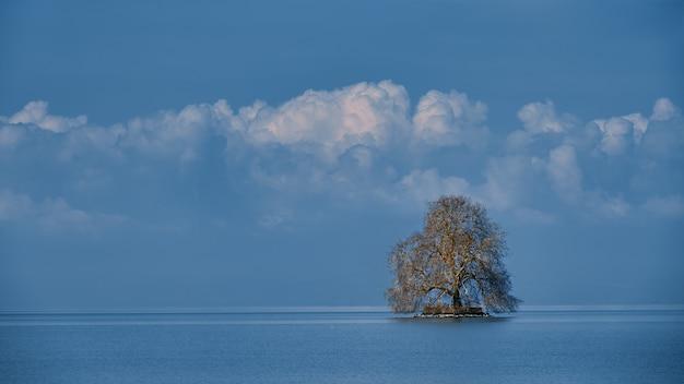 Einsamer baum im meer mit einem bewölkten blauen himmel
