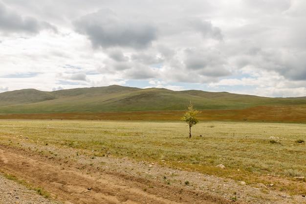 Einsamer baum in der steppe