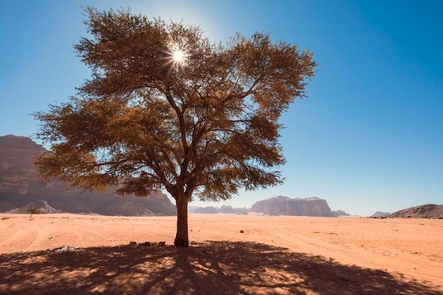Einsamer baum in der wadi rum wüste in jordanien