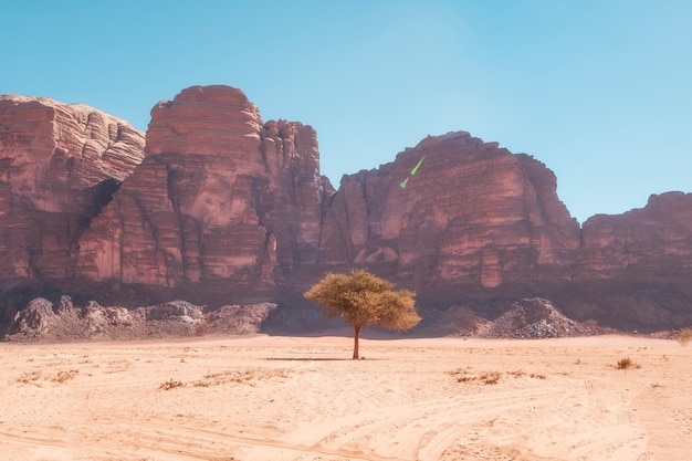 Einsamer baum in der wüste wadi rum in jordanien vor dem hintergrund von sandigen felsen an einem heißen tag