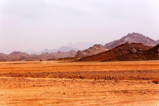 Einsamer baum in der wüste
