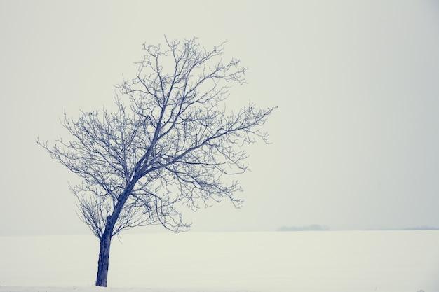 Einsamer baum. natur hintergrund