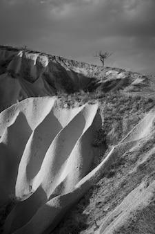 Einsamer baum über malerischen weißen felsen in der wüste