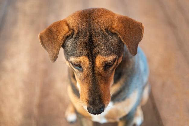 Einsamer entzückender brauner streunender hund, der etwas sitzt und betrachtet