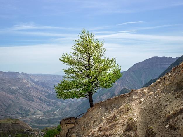 Einsamer grüner baum an einem steilen berghang. minimalistische szene mit kiefer auf grünem talhintergrund. schöne berglandschaft im frühling.