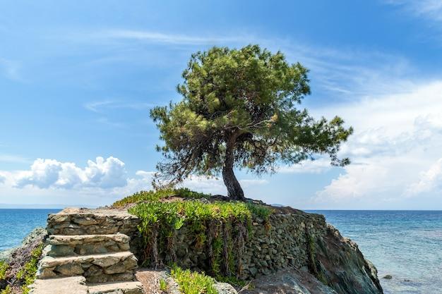 Einsamer olivenbaum auf dem felsen im meer