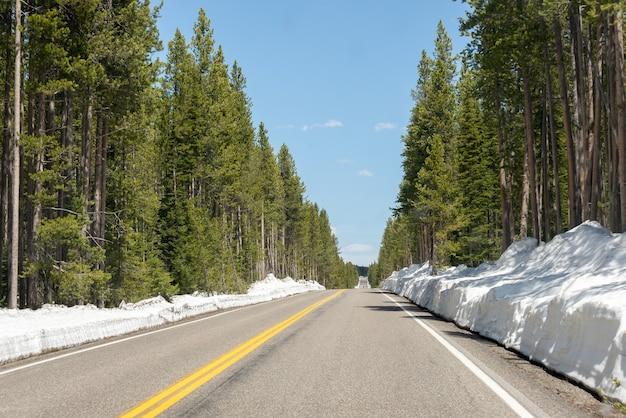 Einsamer südlicher eingang zu yellowstone im winter
