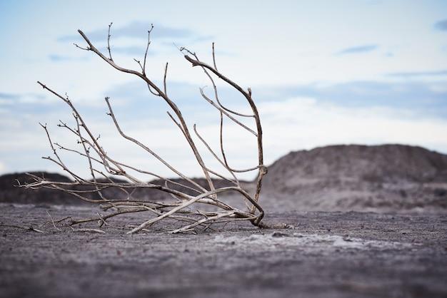 Einsamer toter baum in trockenem boden unter einem bewölkten himmel. konzept der globalen erwärmung.
