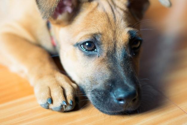 Einsamer und trauriger hund