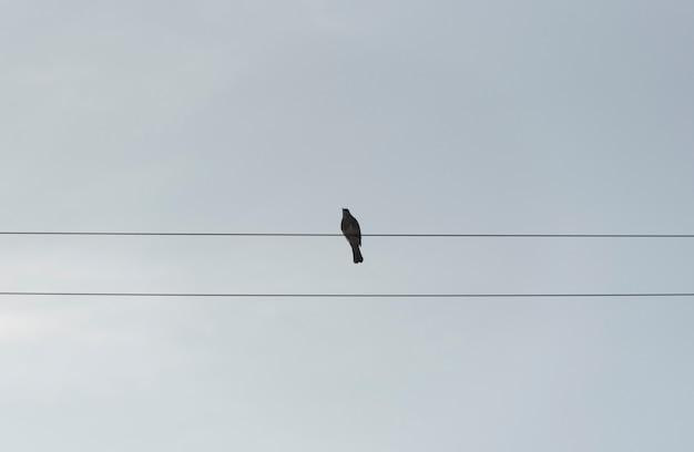 Einsamer vogel, der auf drähten sitzt