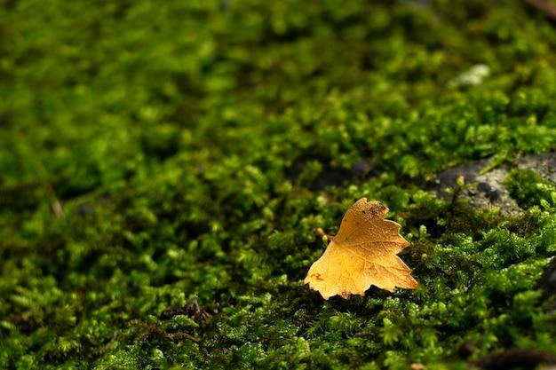 Einsames blatt auf moosgrünem hintergrund