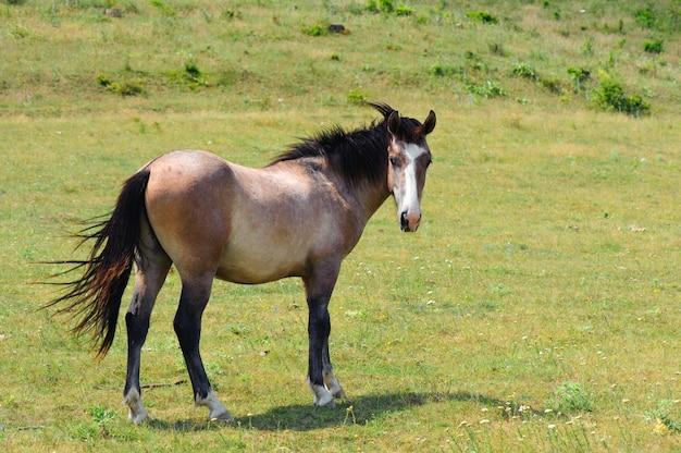 Einsames pferd, das an der grünen wiese weiden lässt