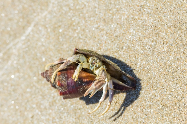 Einsiedlerkrebs am strand in hua hin