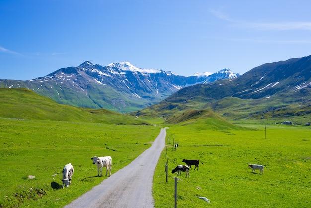 Einspurige straße, die berge und wiesen in der malerischen alpinen landschaft und im klaren blauen himmel kreuzt. sommerabenteuer und roadtrip in den italienischen französischen alpen.