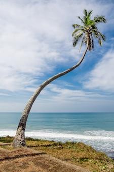 Einzelne palme am tropischen strand.
