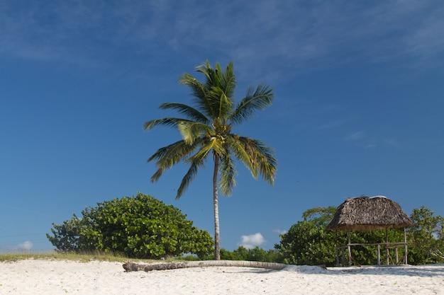 Einzelne palme auf strandlandschaft