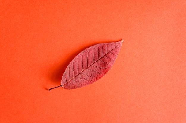 Einzelne rote gefallene herbstkirschblätter auf einem roten papier, flach liegend