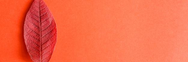 Einzelne rote gefallene herbstkirschblätter auf einem roten papier