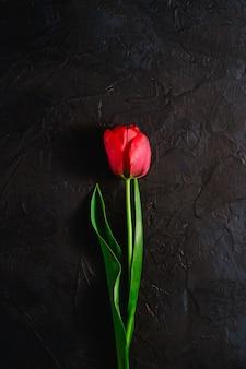 Einzelne rote tulpenblume auf strukturiertem schwarzem hintergrund, kopierraum der draufsicht