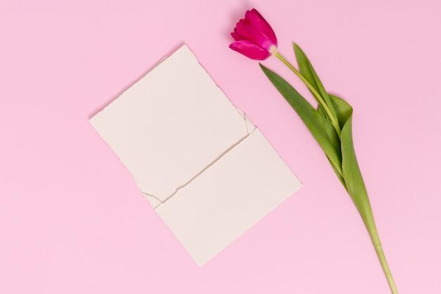 Einzelne tulpenblume mit unbelegter karte gegen rosa hintergrund