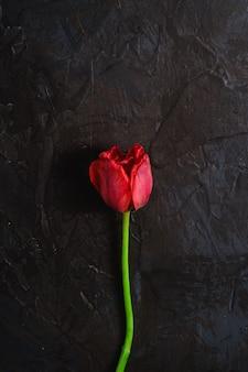 Einzelne verwelkte rote tulpenblume auf strukturierter schwarzer oberfläche, kopierraum der draufsicht