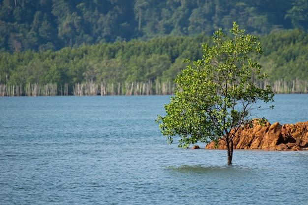 Einzelner baum allein im meer aus dem süden thailands
