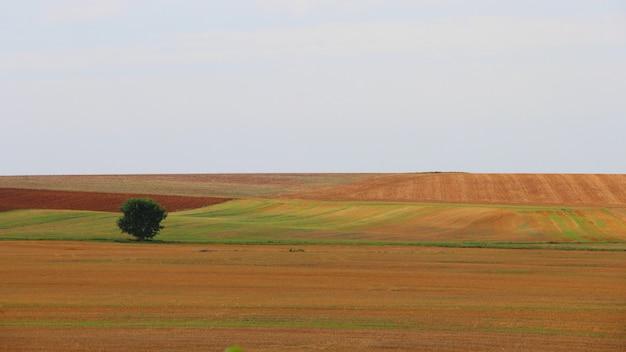 Einzelner baum in einer schönen landschaft unter dem klaren himmel