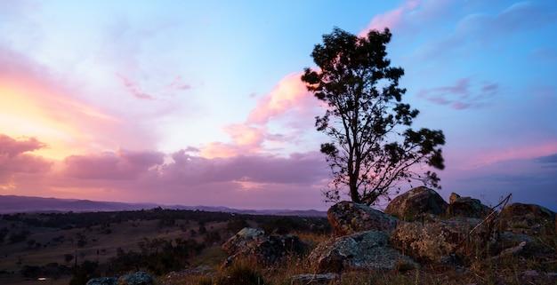 Einzelner baum in einer wüste mit einem schönen bewölkten himmel bei sonnenuntergang