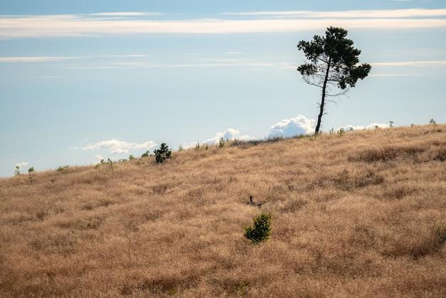 Einzelner einsamer baum oben auf dem hügel an einem sonnigen tag.