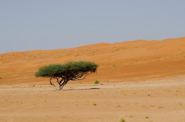Einzelner grünblättriger baum in einem wüstengebiet während des tages