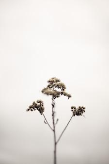 Einzelner isolierter dünner pflanzenzweig